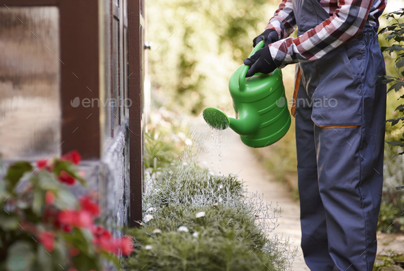 Unrecognizable gardener watering flowers - Stock Photo - Images