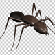 Ant Walk Cycle (4-Pack) - VideoHive Item for Sale