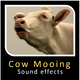 Cow Mooing Sounds