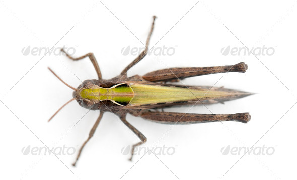 Cricket against white background - Stock Photo - Images