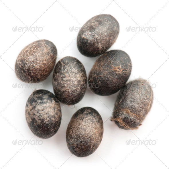 Insect's eggs in front of white background - Stock Photo - Images