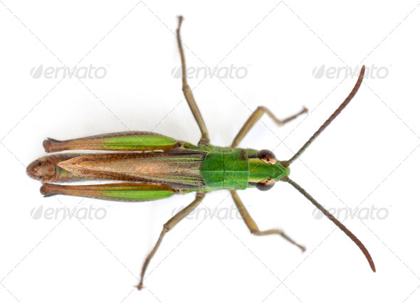 High angle view of cricket in front of white background - Stock Photo - Images