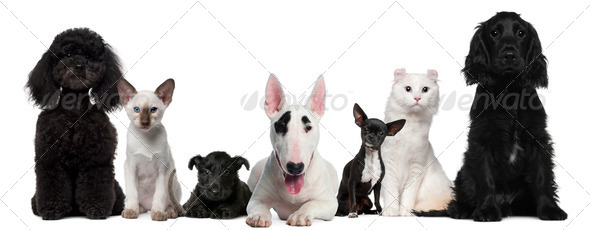 Group of dogs and cats sitting in front of white background - Stock Photo - Images