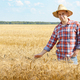 Farmer in straw hat touching wheat spikelets by his hand at corn - PhotoDune Item for Sale