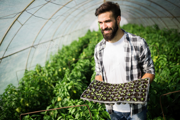 Friendly farmer at work in greenhouse - Stock Photo - Images