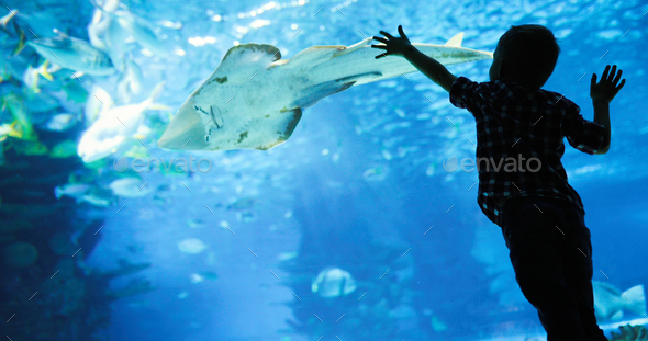 Wonderful underwater world with corals and tropical fish - Stock Photo - Images