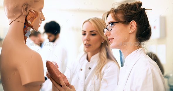 Students of medicine examining anatomical model in classroom - Stock Photo - Images