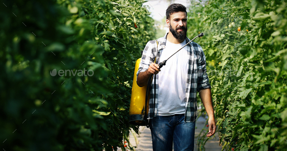 Young farmer protecting his plants with chemicals - Stock Photo - Images