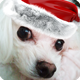 A Christmas Logo