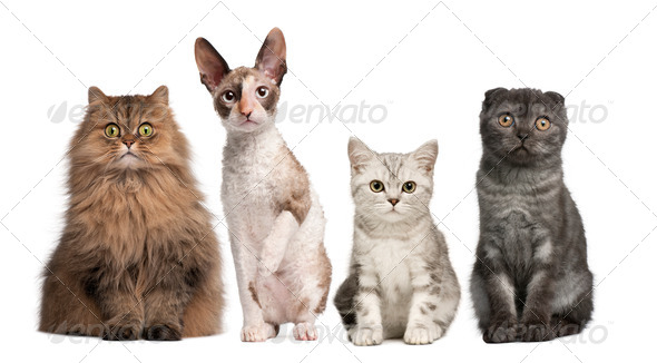 Group of cats sitting in front of white background - Stock Photo - Images