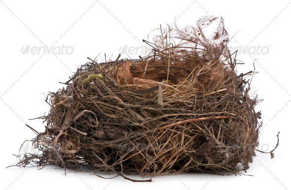 Focus stacking of a Nest of Common Blackbird in front of white background - Stock Photo - Images