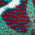 Close-up of Panther Chameleon Nosy Be skin, Furcifer pardalis