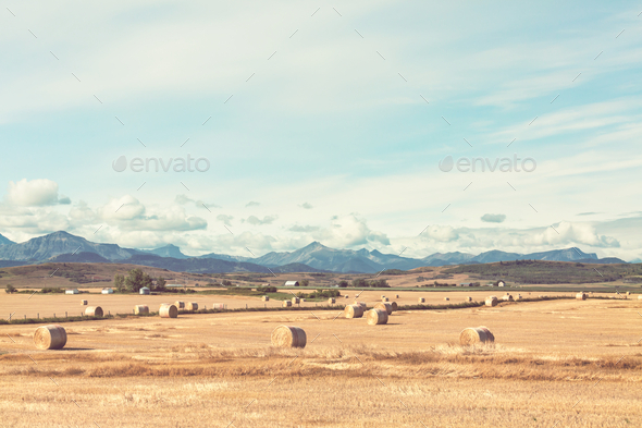 Hay - Stock Photo - Images