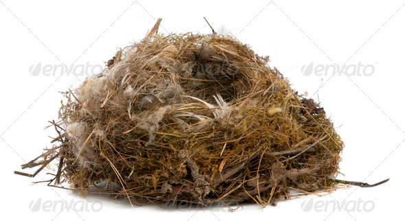 Focus stacking of a Nest of tit in front of white background - Stock Photo - Images