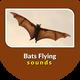 Bats Flying Sounds