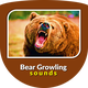 Angry Bear Growling Sounds