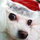 At Christmas Logo