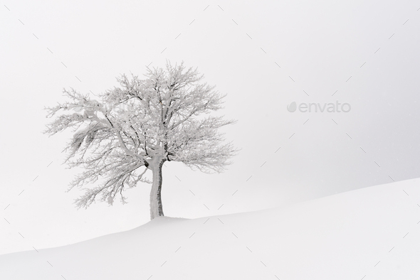 Amazing landscape with a lonely snowy tree - Stock Photo - Images