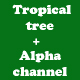 Tropical palm trees(alpha channel)