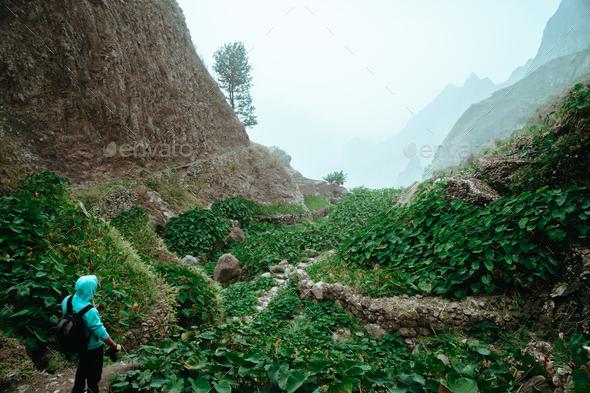 Male hiker walking through a wondrous misty landscape. Huge rocks surround a fertile ravine full of - Stock Photo - Images