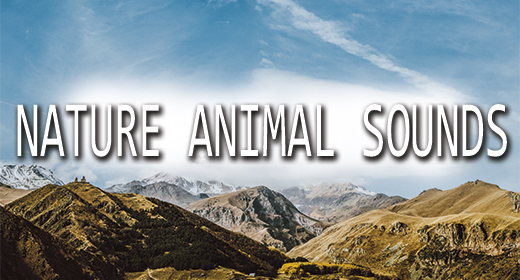 Nature Animals Sounds