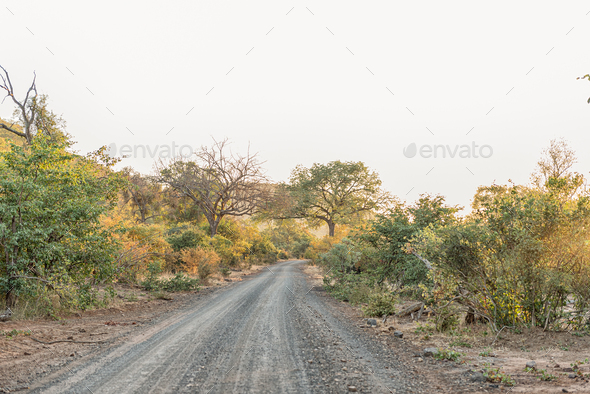 Sunrise landscape between trees on road S60 - Stock Photo - Images