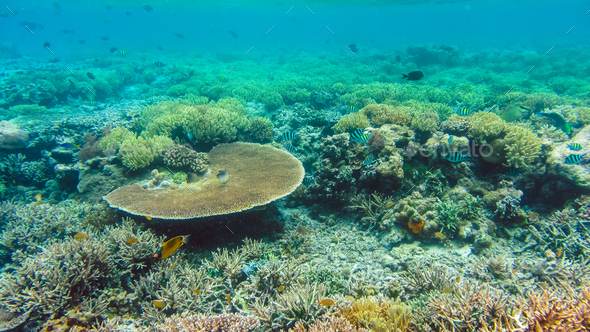 The Riff Edge covered by beautiful Corals on Kri, Raja Ampat, Indonesia - Stock Photo - Images