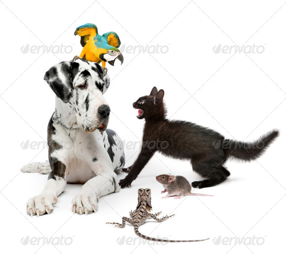 Group of pets in front of white background - Stock Photo - Images