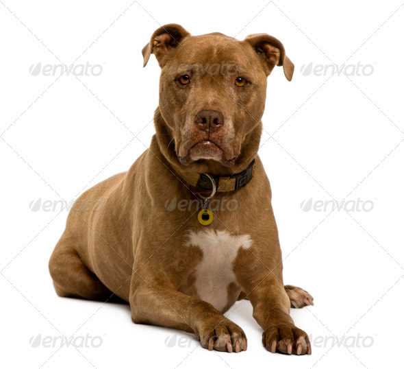 Crossbreed dog, 12 years old, sitting in front of white background, studio shot - Stock Photo - Images