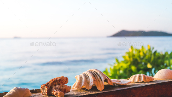 Sea Mussels Shells on Parapet of an Homestay on Gam Island, West Papuan, Raja Ampat, Indonesia - Stock Photo - Images