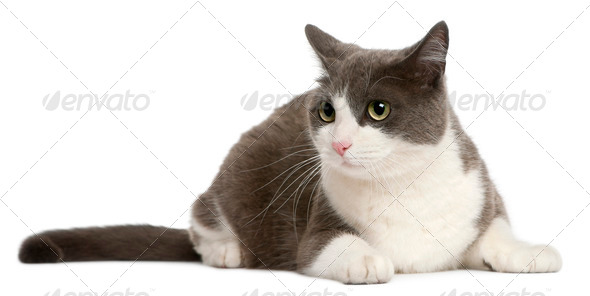 Cat lying in front of white background - Stock Photo - Images