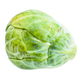 single ripe brussels sprout isolated on white - PhotoDune Item for Sale