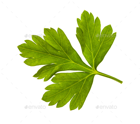 fresh green leaves of parsley herb isolated - Stock Photo - Images