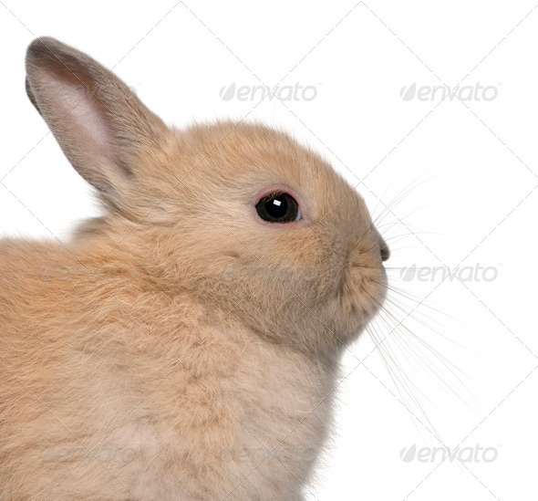 Close-up of young rabbit in front of white background - Stock Photo - Images
