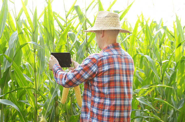 Farmer using tablet computer for inspecting maize corn field. Ha - Stock Photo - Images