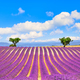 Lavender and two trees uphill. Provence, France - PhotoDune Item for Sale