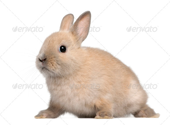 Young rabbit in front of white background - Stock Photo - Images