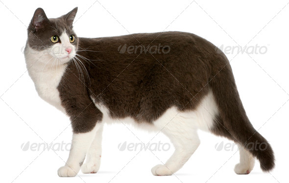 Cat standing in front of white background - Stock Photo - Images