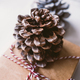 Pine cone - PhotoDune Item for Sale
