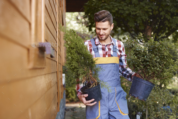 Male gardener holding flowerpot with seedling - Stock Photo - Images