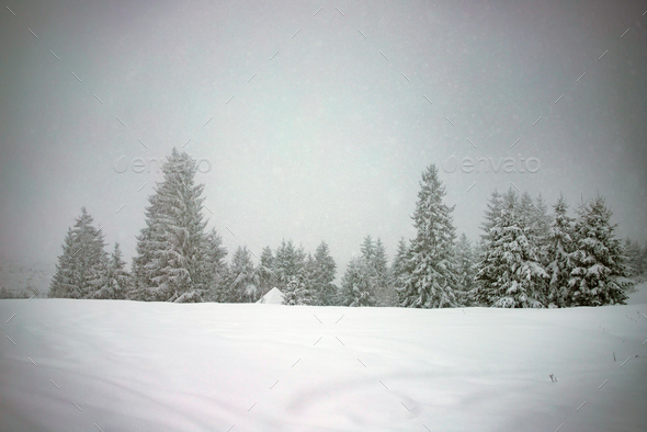 Snowy fir forest in winter mountains - Stock Photo - Images