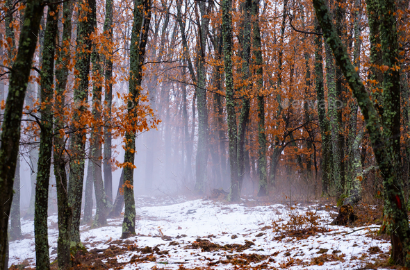 Mist in the woods - Stock Photo - Images