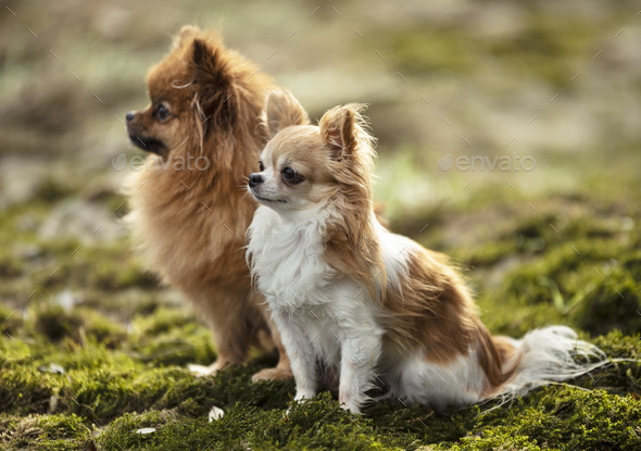 dogs in nature - Stock Photo - Images
