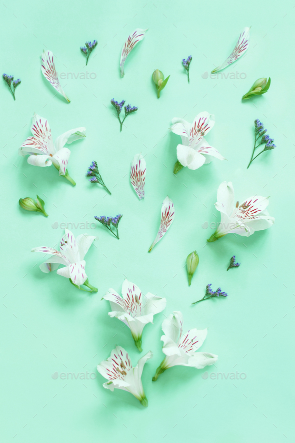 Flowers on a light green background - Stock Photo - Images