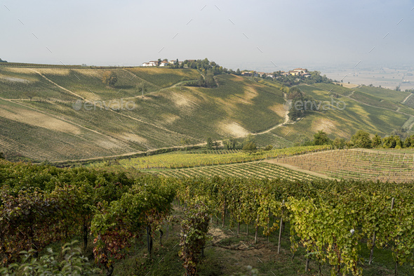 Vineyards of Oltrepo Pavese, Italy, at fall - Stock Photo - Images