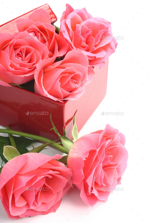 Pink roses and red gift box over white - Stock Photo - Images