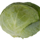 A large head of cabbage is shown in close-up. Isolated in a white background. - PhotoDune Item for Sale