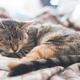 Young european shorthair cat sleeping in bed - PhotoDune Item for Sale