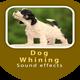 Dog Whining Sound