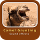 Camel Grunting Sounds